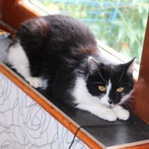 Mladá štíhlá černá kočička
